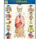 ANATOMY OF THE ORGANS